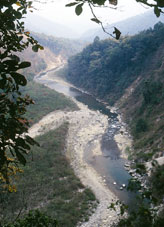Flora, Fauna & Rivers in Jim Corbett National Park (Corbett Tiger Reserve), Online Booking & Reservation, jimcorbettnationalparkonline.com
